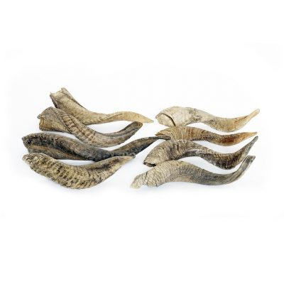 Ramshoorns hoorns dier